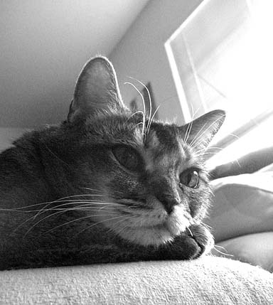 brandy black & white photo